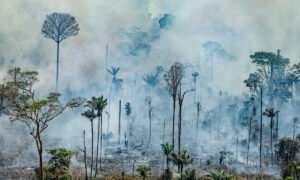 Flames in Brazil's Amazon rainforest flood in July, most exceedingly terrible as of late