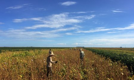 Brazilian soy farmers try 5G technology with Huawei equipment